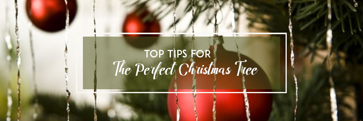Top Tips For The Perfect Christmas Tree